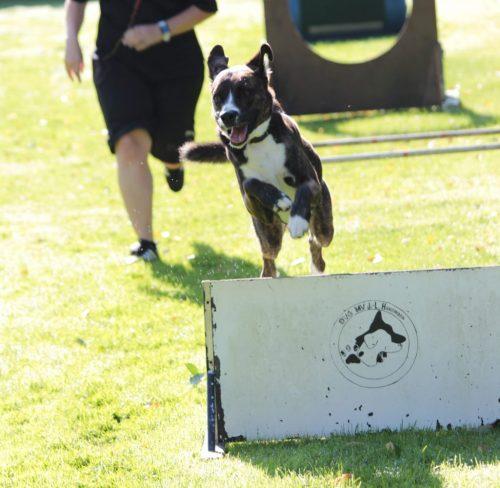Turnierhundsport