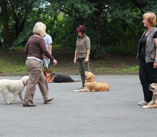 Übung außerhalb des Hundeplatzes